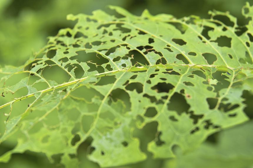 化学肥料が生んだ農業の矛盾