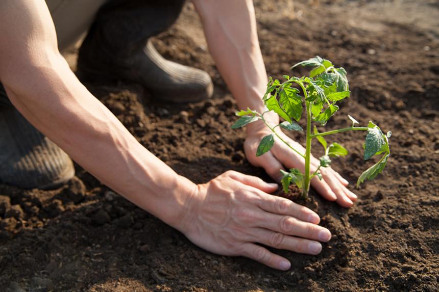 土の中の微生物の役目