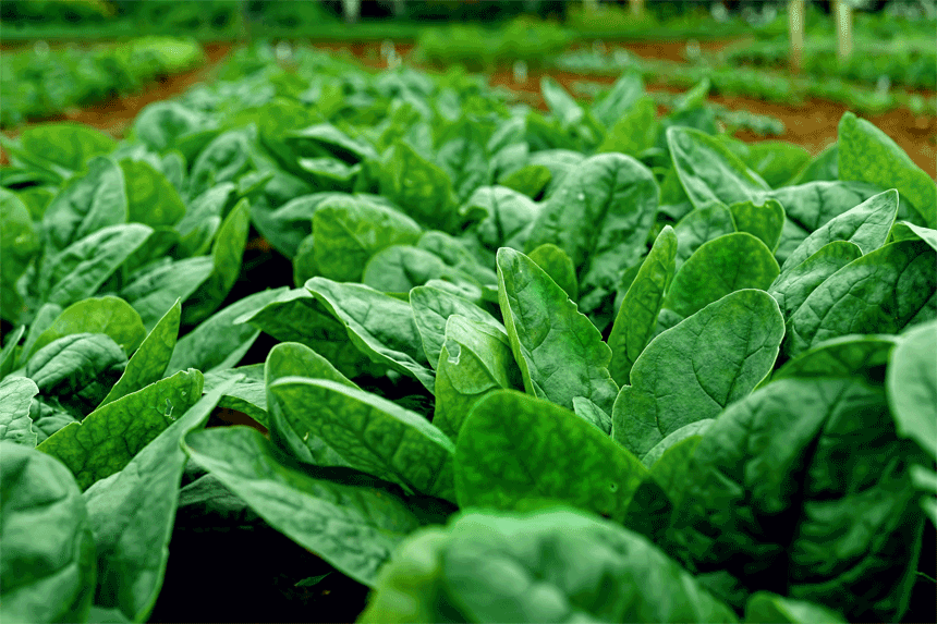日本は残留農薬の規制を大幅に緩和
